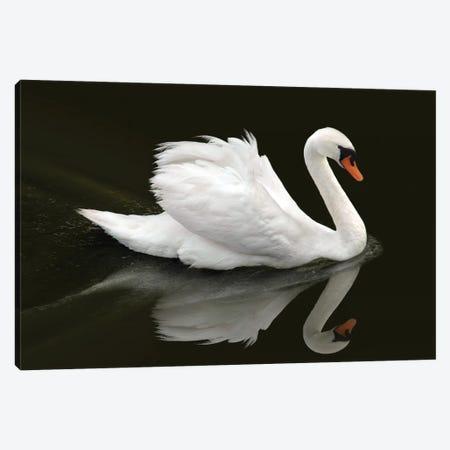 Swan Canvas Print #BHE318} by Ben Heine Canvas Art Print