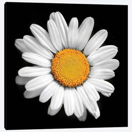 There Is A Sun In Every Flower Canvas Print #BHE333} by Ben Heine Canvas Art Print