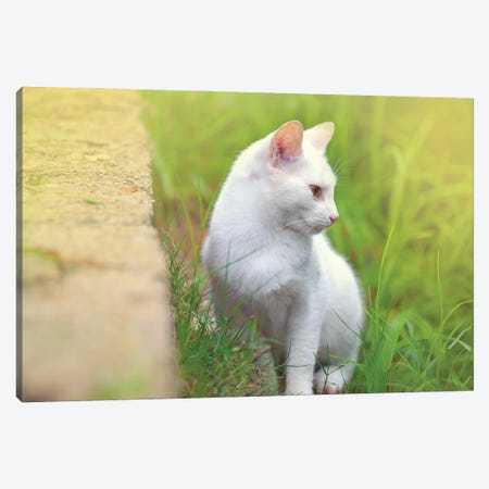 White Cat 61 Canvas Print #BHE353} by Ben Heine Canvas Print