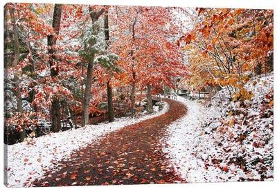 Two Seasons Canvas Art Print