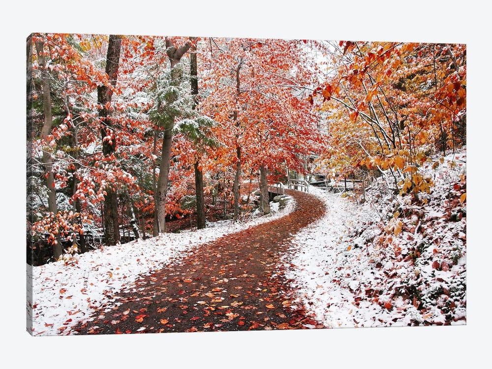 Two Seasons by Ben Heine 1-piece Canvas Art