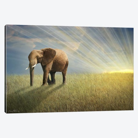 Walk With The Light Canvas Print #BHE44} by Ben Heine Canvas Art
