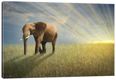 Walk With The Light Canvas Print #BHE44