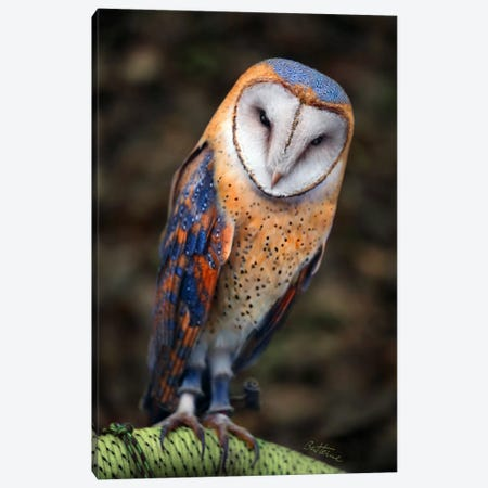 Cute Owl Canvas Print #BHE63} by Ben Heine Canvas Print