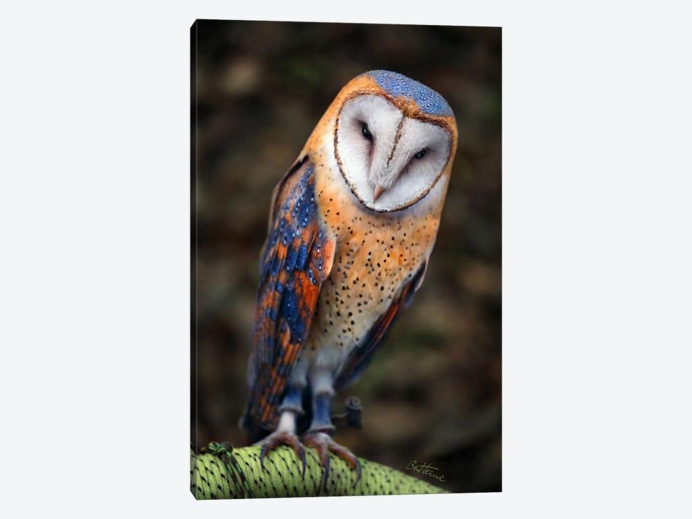 Cute Owl by Ben Heine 1-piece Canvas Art