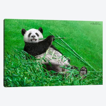 Funny Panda Canvas Print #BHE75} by Ben Heine Canvas Art Print