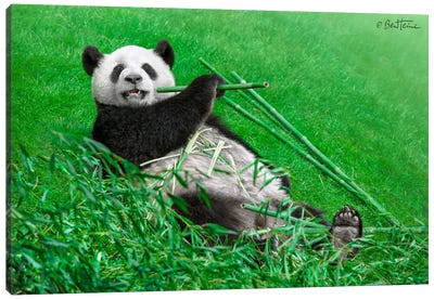 Funny Panda Canvas Art Print