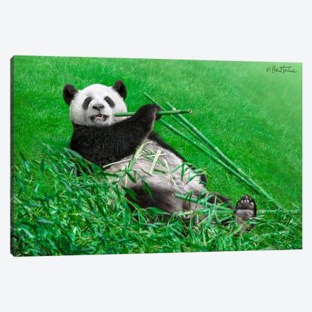 Funny Panda Canvas Print #BHE75} by Ben Heine Canvas Art Print
