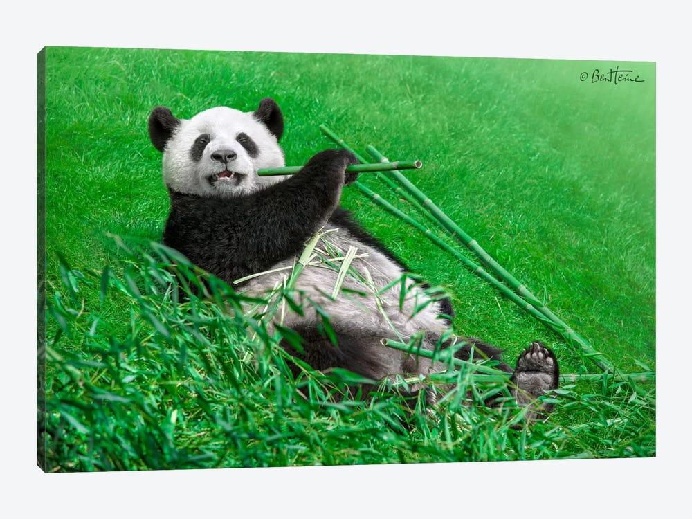 Funny Panda by Ben Heine 1-piece Canvas Print