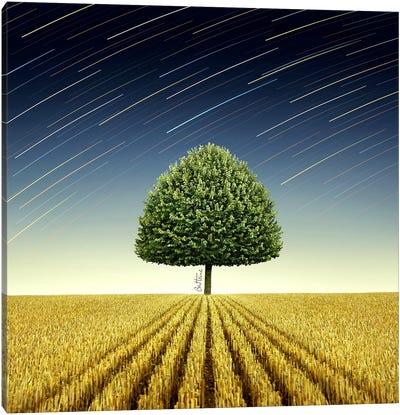 Newton's Apple Tree Canvas Print #BHE9