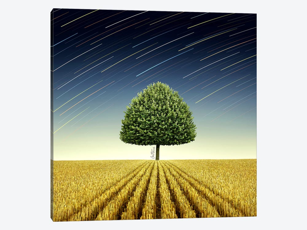 Newton's Apple Tree 1-piece Canvas Art