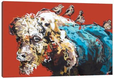 Omar The Bison Canvas Art Print