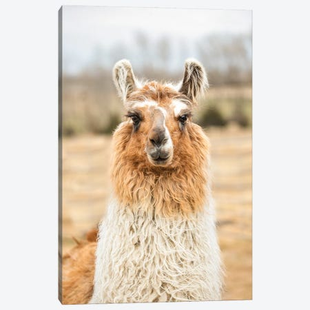 Llama Mama Canvas Print #BHT10} by Beth Houts Canvas Art Print