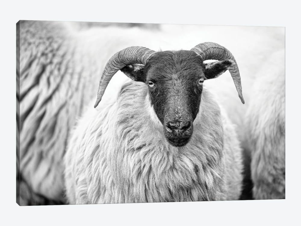 Love Ewe by Beth Houts 1-piece Canvas Artwork
