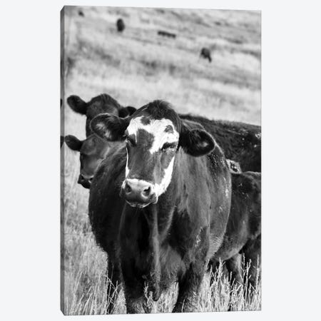 Cattle Guard Canvas Print #BHT20} by Beth Houts Canvas Wall Art