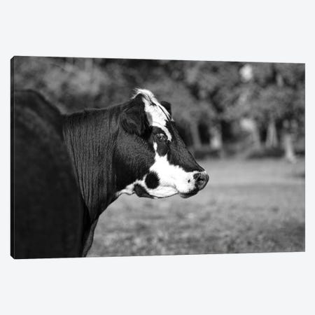 Rear View Canvas Print #BHT23} by Beth Houts Canvas Artwork