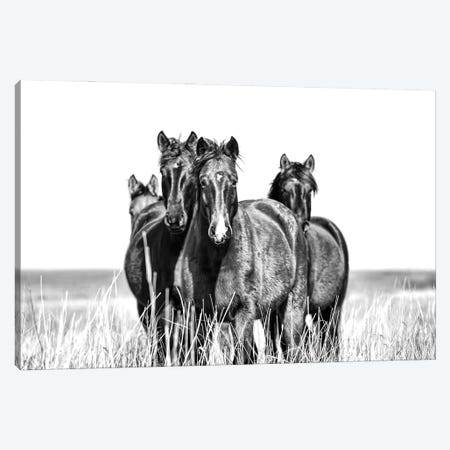 Our Turf Canvas Print #BHT26} by Beth Houts Canvas Print