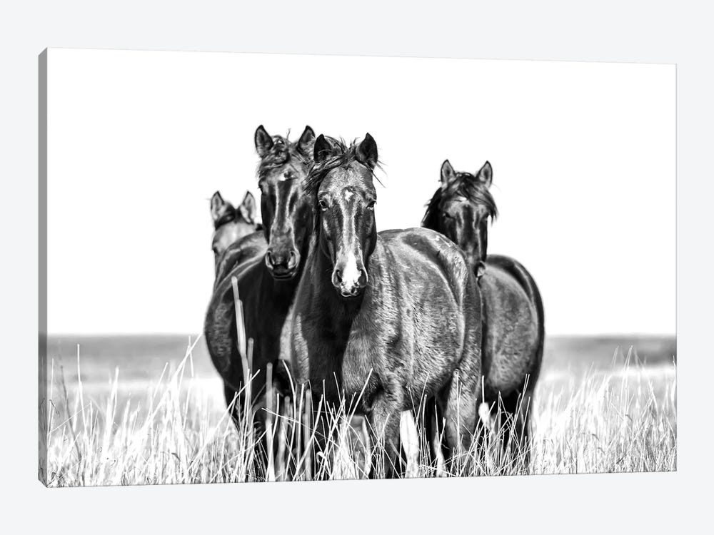 Our Turf by Beth Houts 1-piece Art Print