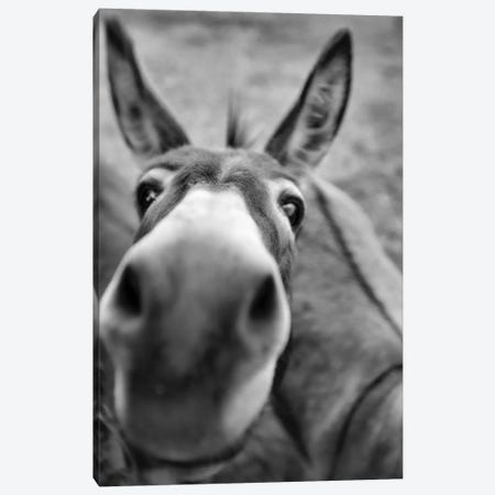 Donksee Canvas Print #BHT31} by Beth Houts Art Print