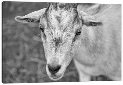 You Goat Me Canvas Art Print