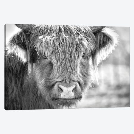 Little Moo Canvas Print #BHT8} by Beth Houts Art Print