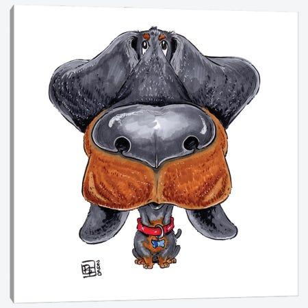 Dachshund Canvas Print #BIF103} by Billi French Canvas Art
