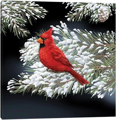 Night Cardinal Canvas Art Print