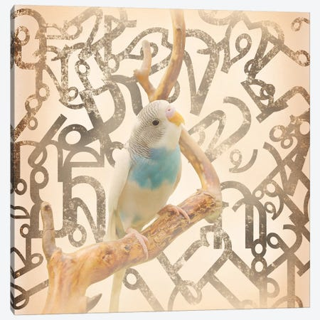 Long Tail Budgie Canvas Print #BITW1} by 5by5collective Canvas Print