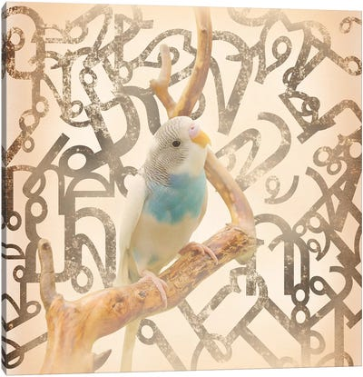 Long Tail Budgie Canvas Art Print