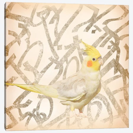 Royal Crested Cockatiel Canvas Print #BITW3} by 5by5collective Canvas Print