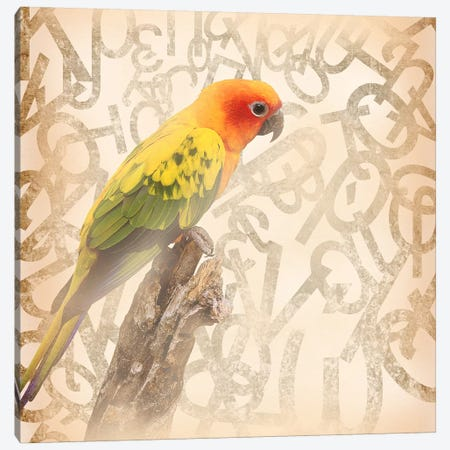Social Sunburst Conure Canvas Print #BITW4} by 5by5collective Canvas Artwork