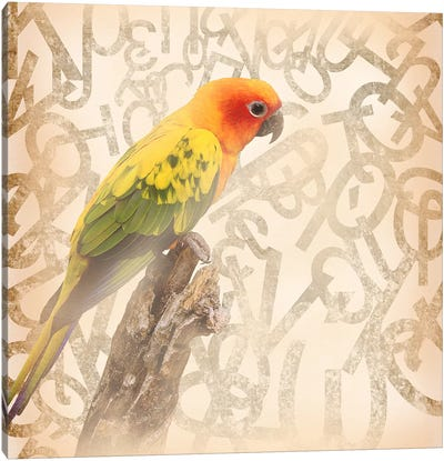 Social Sunburst Conure Canvas Art Print
