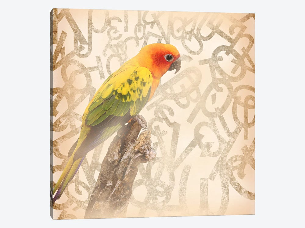 Social Sunburst Conure by 5by5collective 1-piece Canvas Wall Art