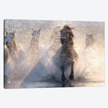 Run Canvas Print #BIZ1} by Bingo Z Canvas Artwork
