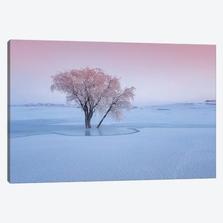 Good Morning Canvas Print #BIZ2} by Bingo Z Canvas Artwork