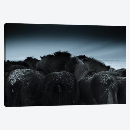 Cold Weather Canvas Print #BIZ7} by Bingo Z Canvas Print