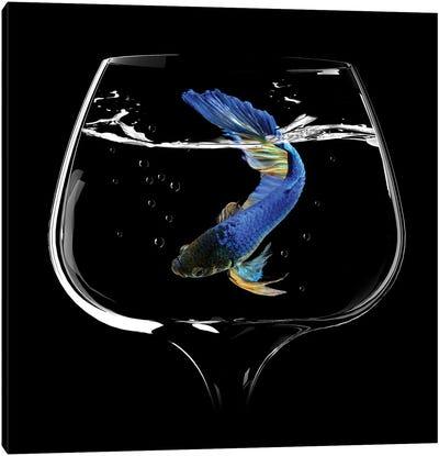 Betta Fish Dance Canvas Art Print