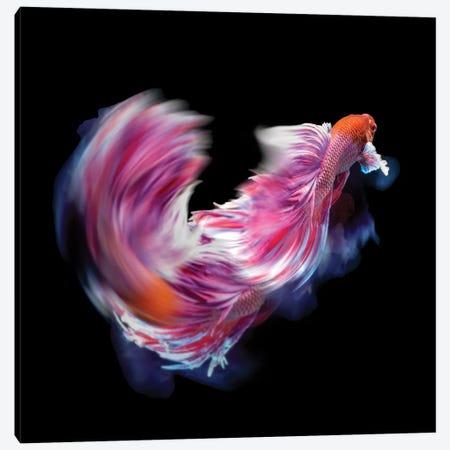 Bettafish Dance Motion Canvas Print #BJM7} by Antonyus Bunjamin Canvas Art