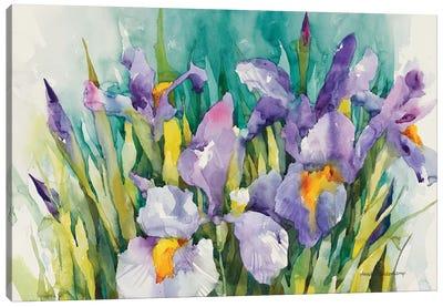 Purple Irises Canvas Art Print