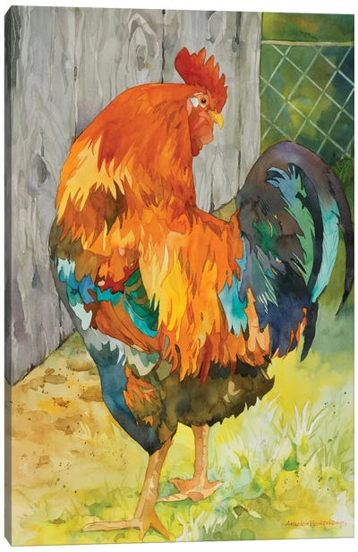 Rooster Pen Canvas Art Print