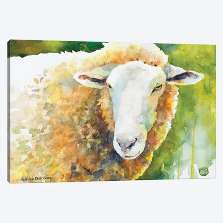 Sheep IV Canvas Print #BKK141} by Annelein Beukenkamp Canvas Print