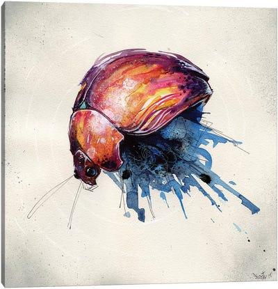 Beetle Juice III Canvas Art Print
