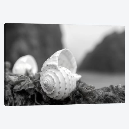 Crescent Beach Shells I Canvas Print #BLA18} by Alan Blaustein Canvas Print