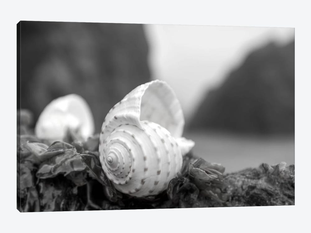 Crescent Beach Shells I by Alan Blaustein 1-piece Canvas Print
