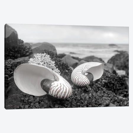 Crescent Beach Shells II Canvas Print #BLA19} by Alan Blaustein Art Print