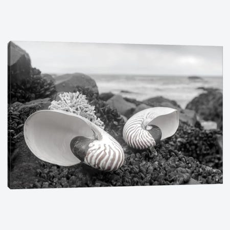 Crescent Beach Shells II Canvas Print #BLA19} by Alan Blaustein Art Print