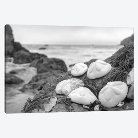 Crescent Beach Shells IV 3-Piece Canvas #BLA21} by Alan Blaustein Canvas Artwork