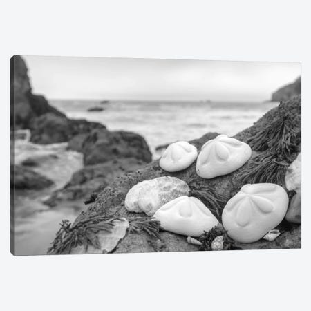 Crescent Beach Shells IV Canvas Print #BLA21} by Alan Blaustein Canvas Artwork
