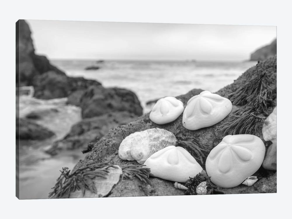 Crescent Beach Shells IV by Alan Blaustein 1-piece Canvas Art Print