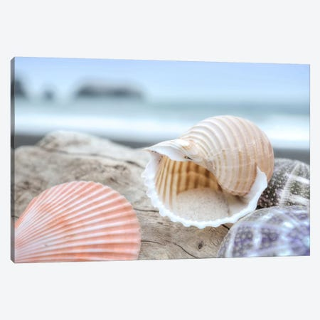 Crescent Beach Shells IX Canvas Print #BLA22} by Alan Blaustein Canvas Wall Art
